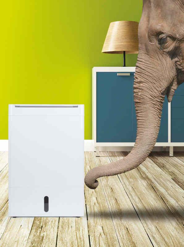 Elefant und der dd8l zambezi luftentfeuchter