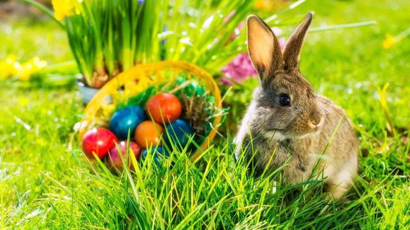 Der Hase bringt die Eier an Ostern.