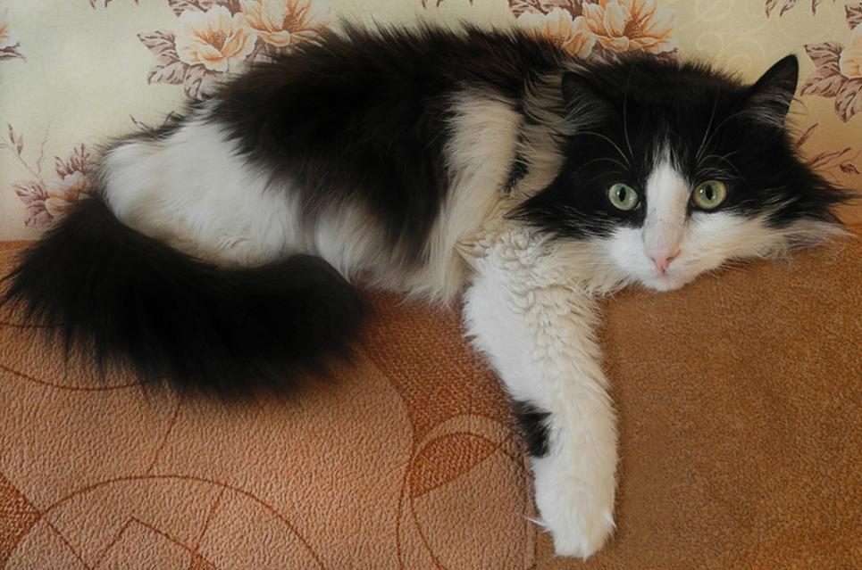 Katze zu Hause hinterlässt überall ihre Haare