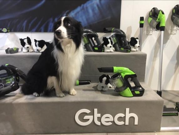 Herziger Hund mit Gtech Staubsaugern