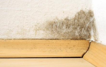 Schimmelpilz in der Wohnung schadet der Gesundheit und der Mieter muss für den Schaden aufkommen.