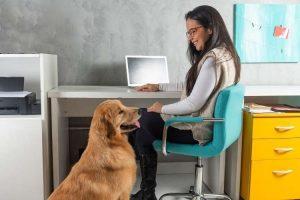 Nimm deinen Hund mit zur Arbeit Tag 2021